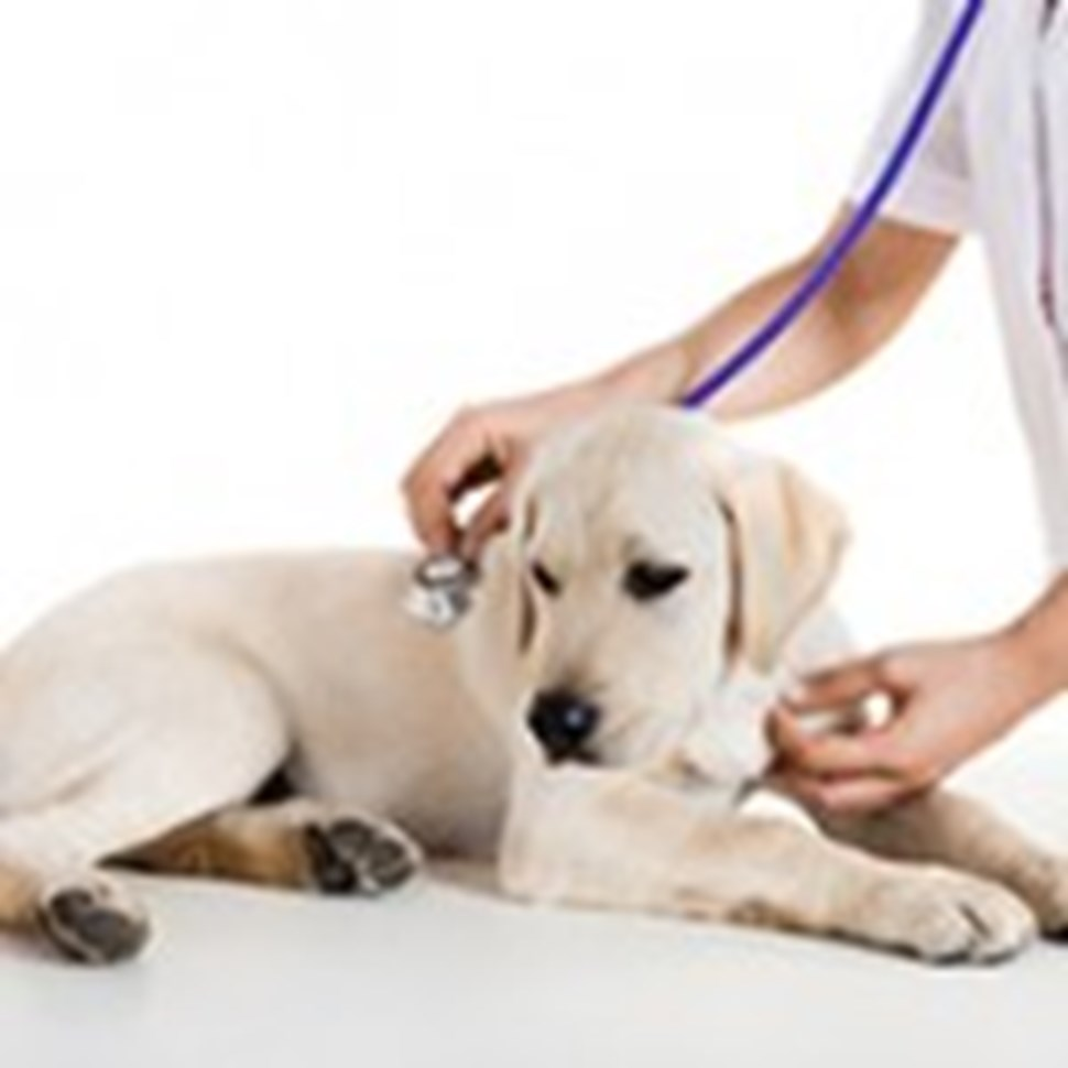 Dog_VetClinicCheckup_blog