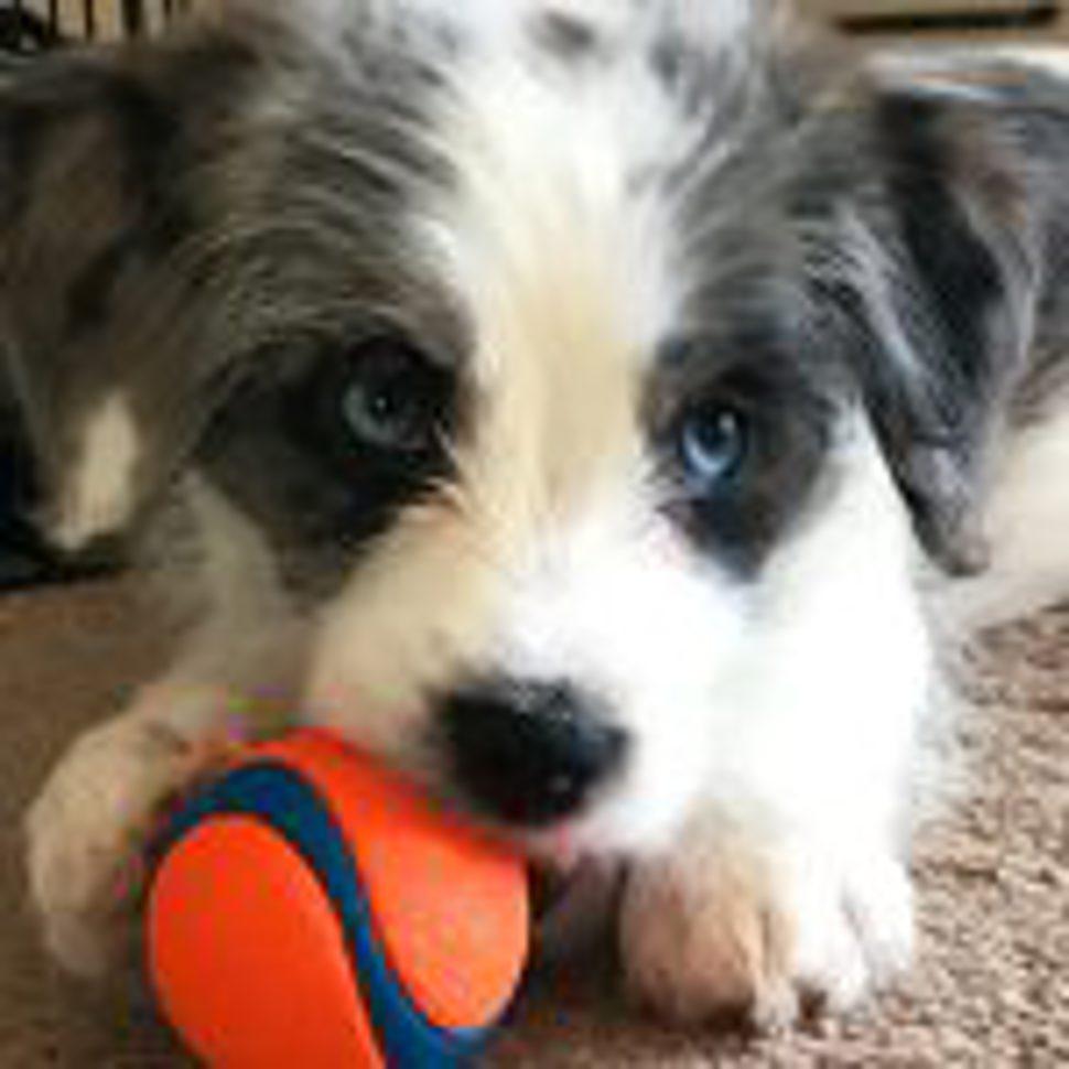 2018 03 23 National Puppy Day 7 Dog Facts Neogen